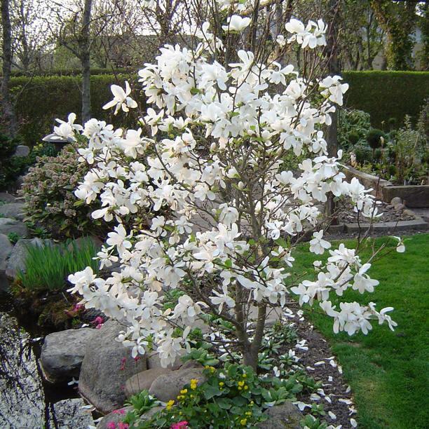 Magnolia-Dr-Merrill